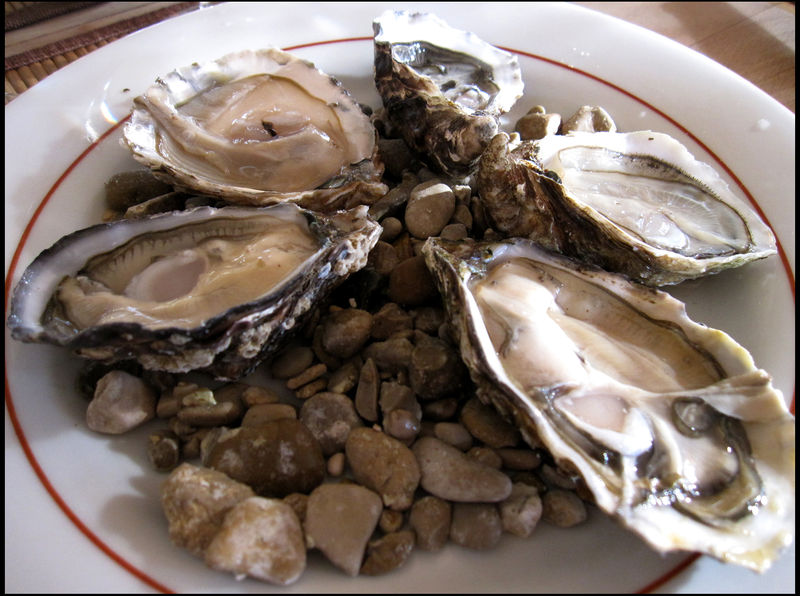 Huitr oysters ligne