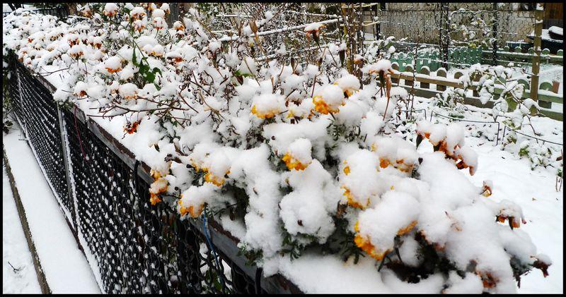 Paris snowed dec09 05
