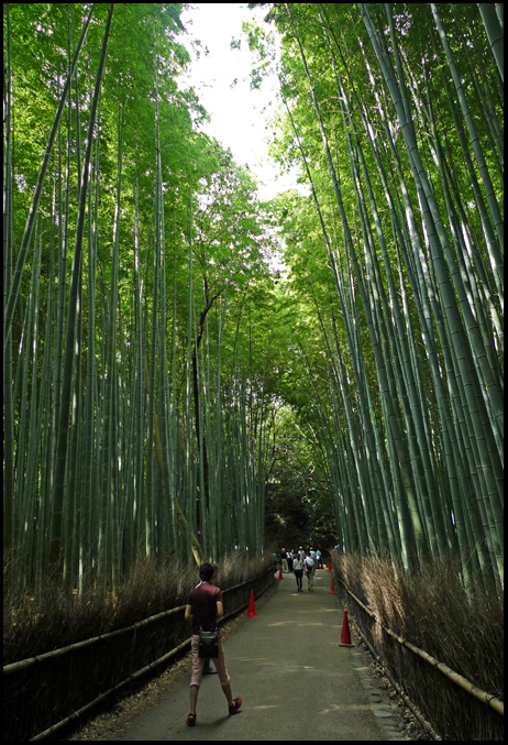 Bamboo groves1