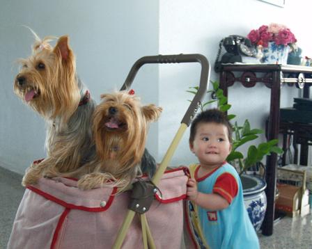 3_w_dog_stroller_3