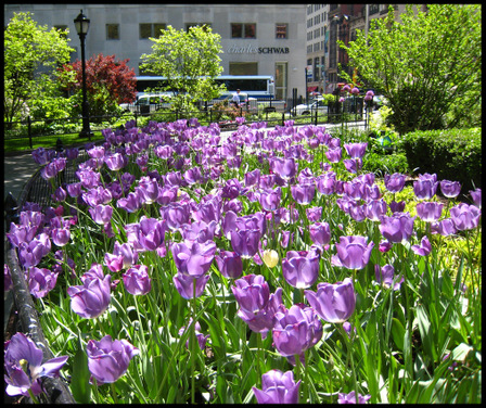 Madison_square_gardens