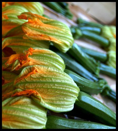 Zucchini_blossoms