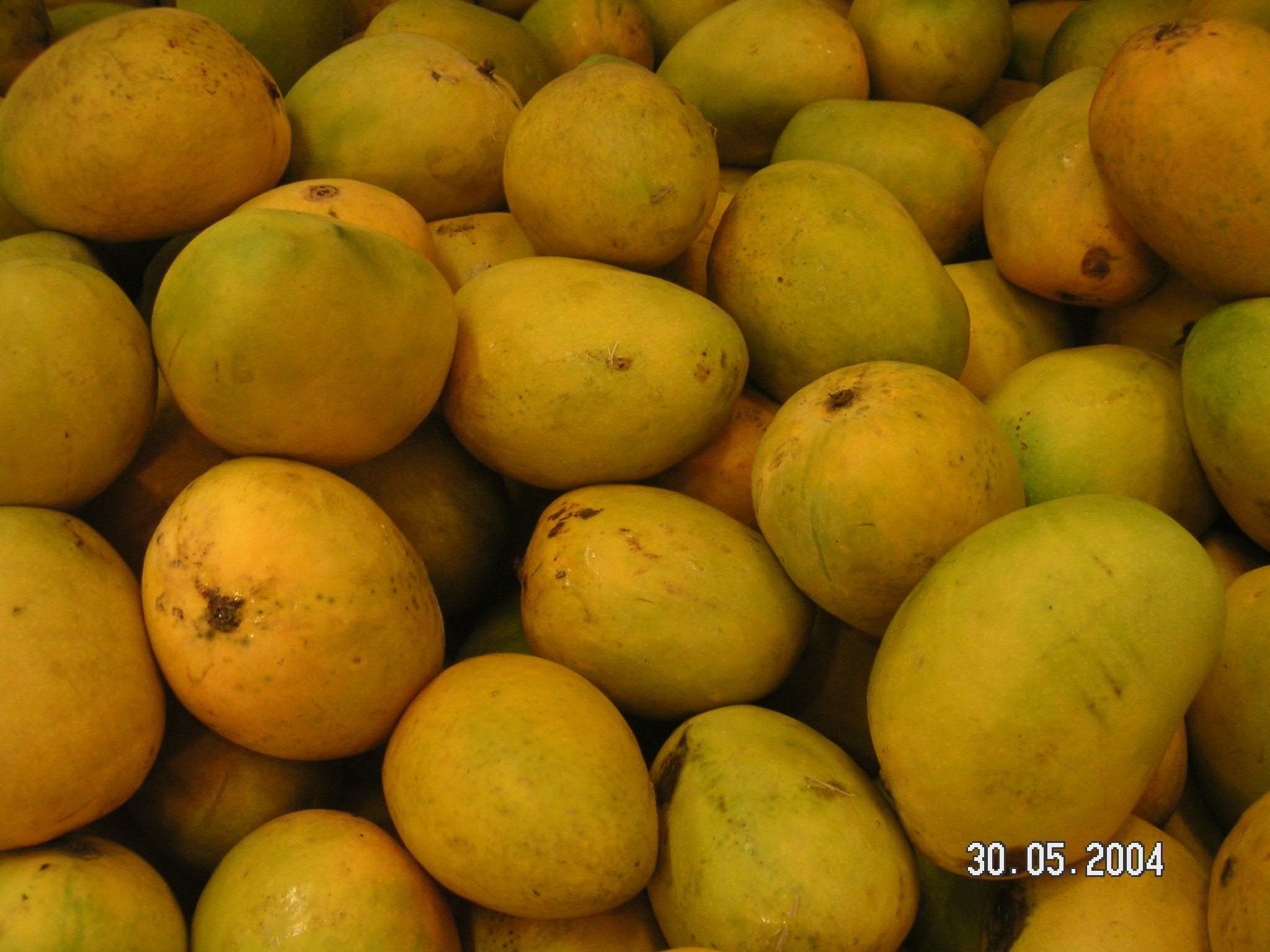 alphonso_mangoes