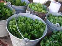 Mountain_man_herbs_in_pails