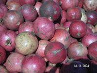 Pomegranate_season