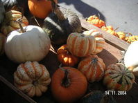 Pumpkins_galore